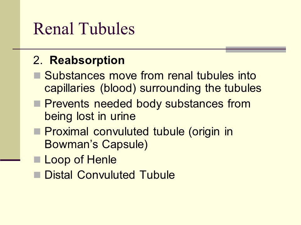 Renal Tubules 2. Reabsorption