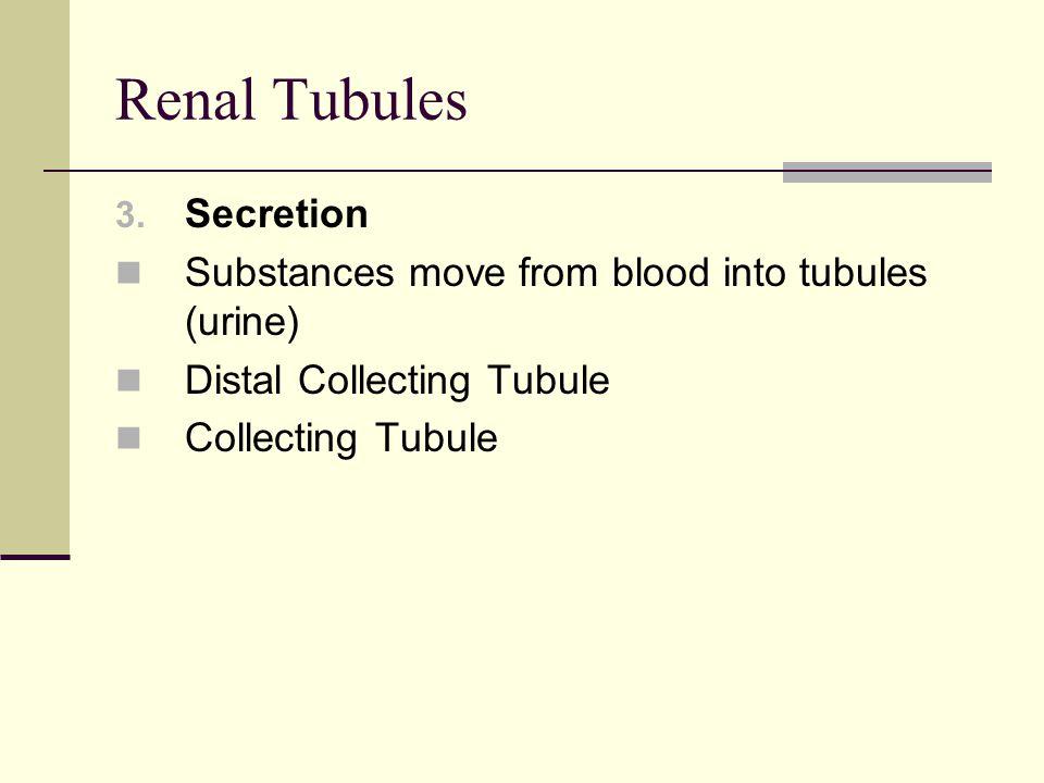 Renal Tubules Secretion