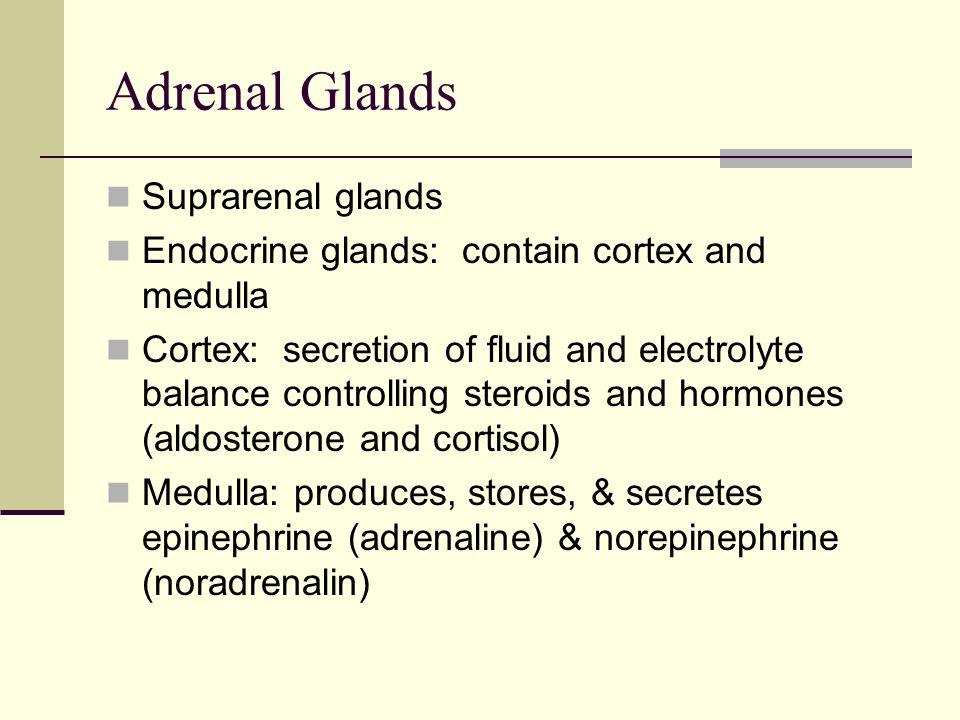 Adrenal Glands Suprarenal glands