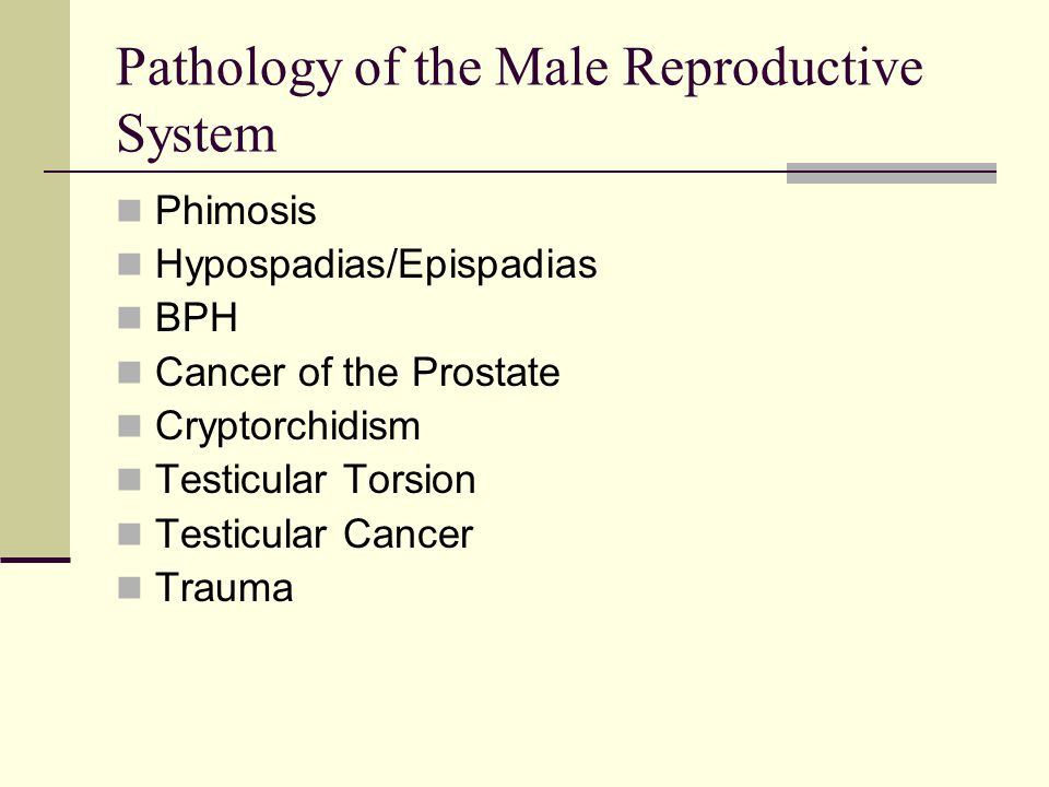 Pathology of the Male Reproductive System