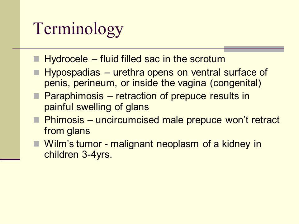 Terminology Hydrocele – fluid filled sac in the scrotum