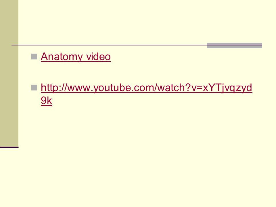 Anatomy video http://www.youtube.com/watch v=xYTjvqzyd9k