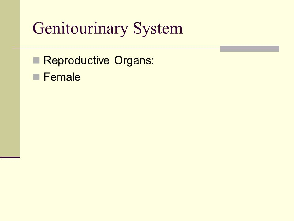Genitourinary System Reproductive Organs: Female