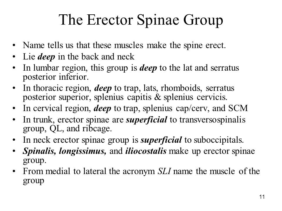 The Erector Spinae Group