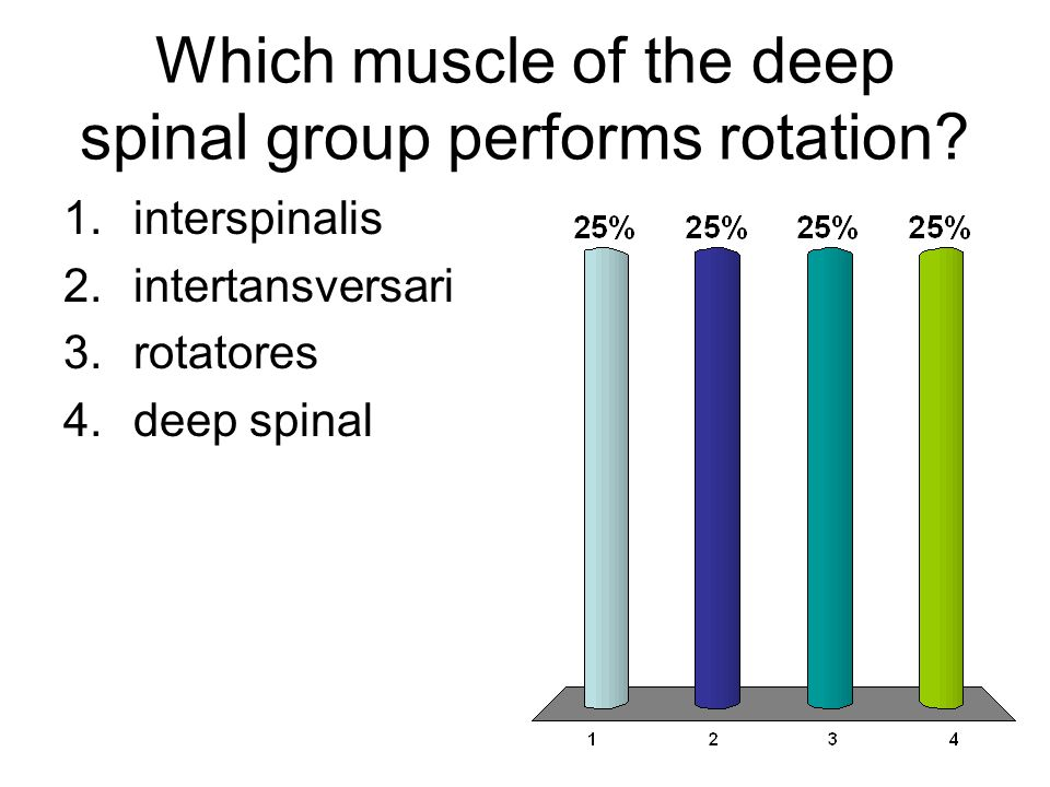 Which muscle of the deep spinal group performs rotation