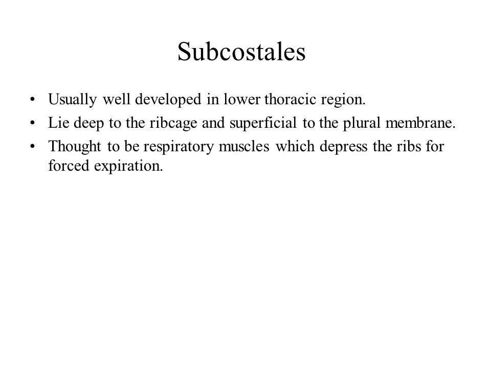 Subcostales Usually well developed in lower thoracic region.