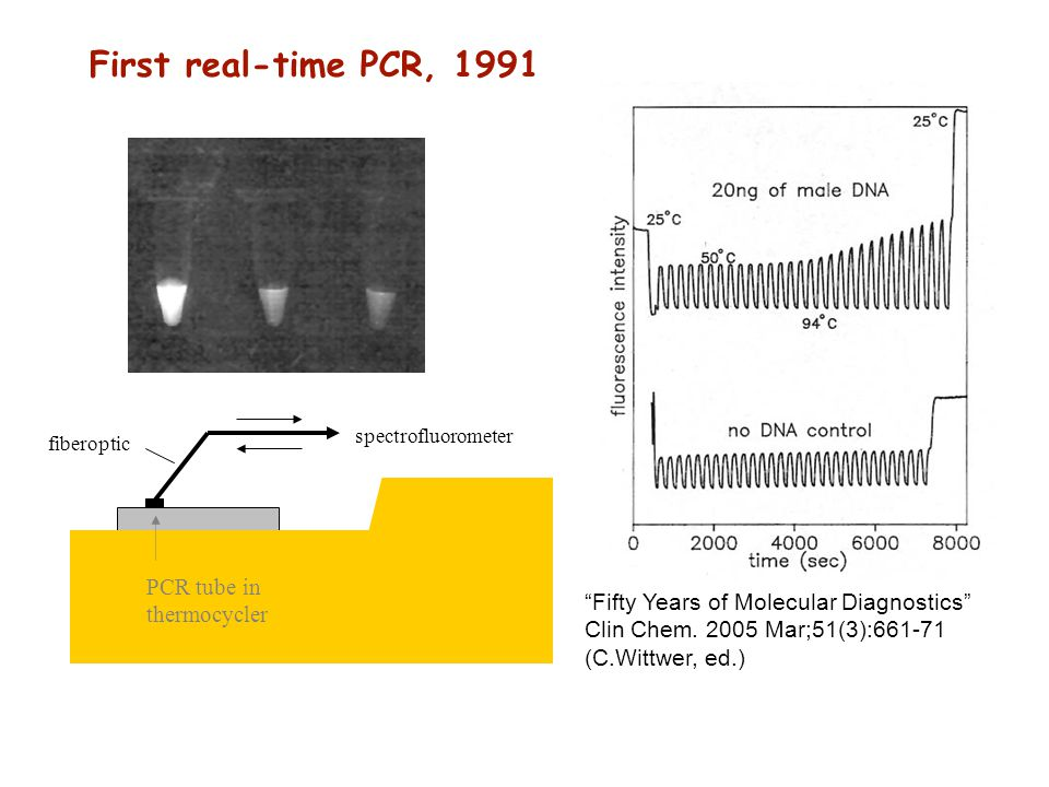 First real-time PCR, 1991 PCR tube in thermocycler