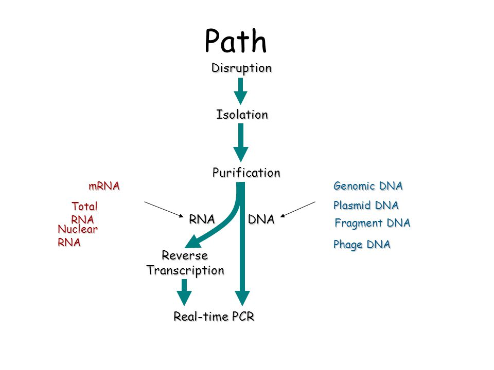 Path Reverse Transcription Real-time PCR DNA RNA Purification