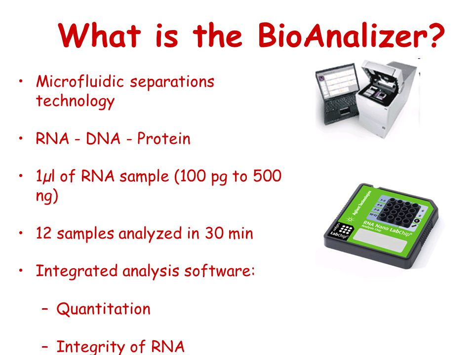 What is the BioAnalizer