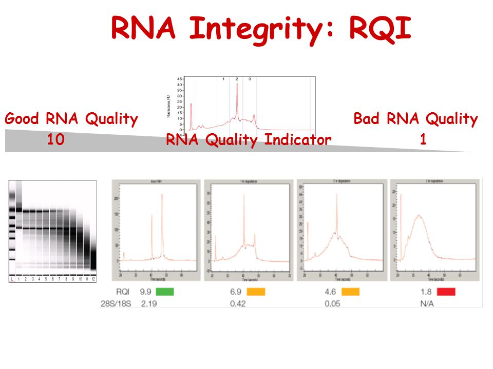 RNA Integrity: RQI Good RNA Quality Bad RNA Quality