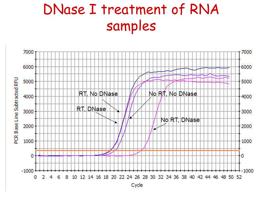 DNase I treatment of RNA samples