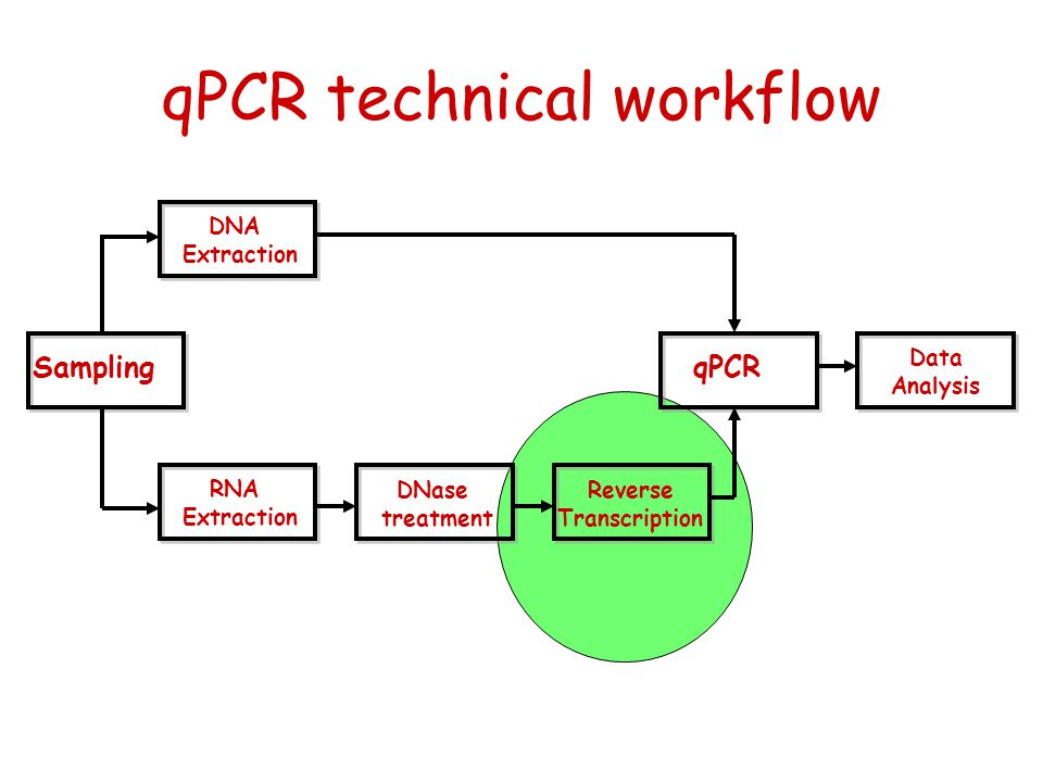 qPCR technical workflow