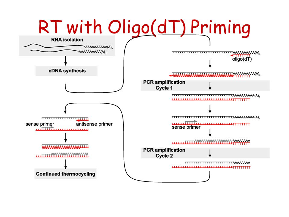 RT with Oligo(dT) Priming