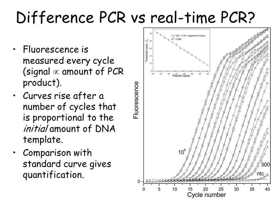 Difference PCR vs real-time PCR