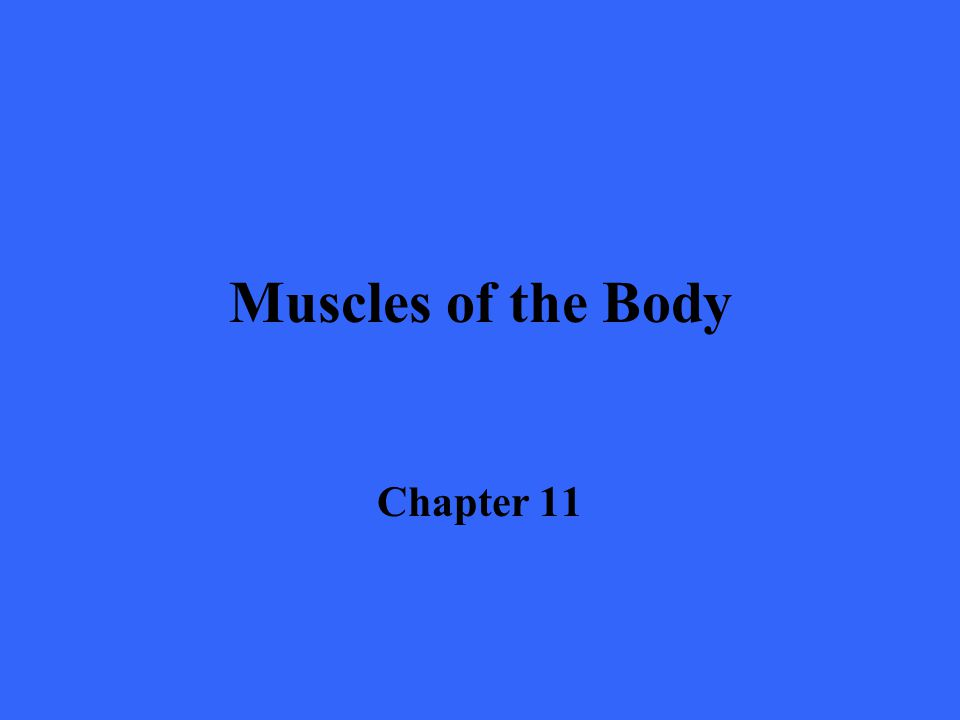 Muscles of the Body Chapter 11