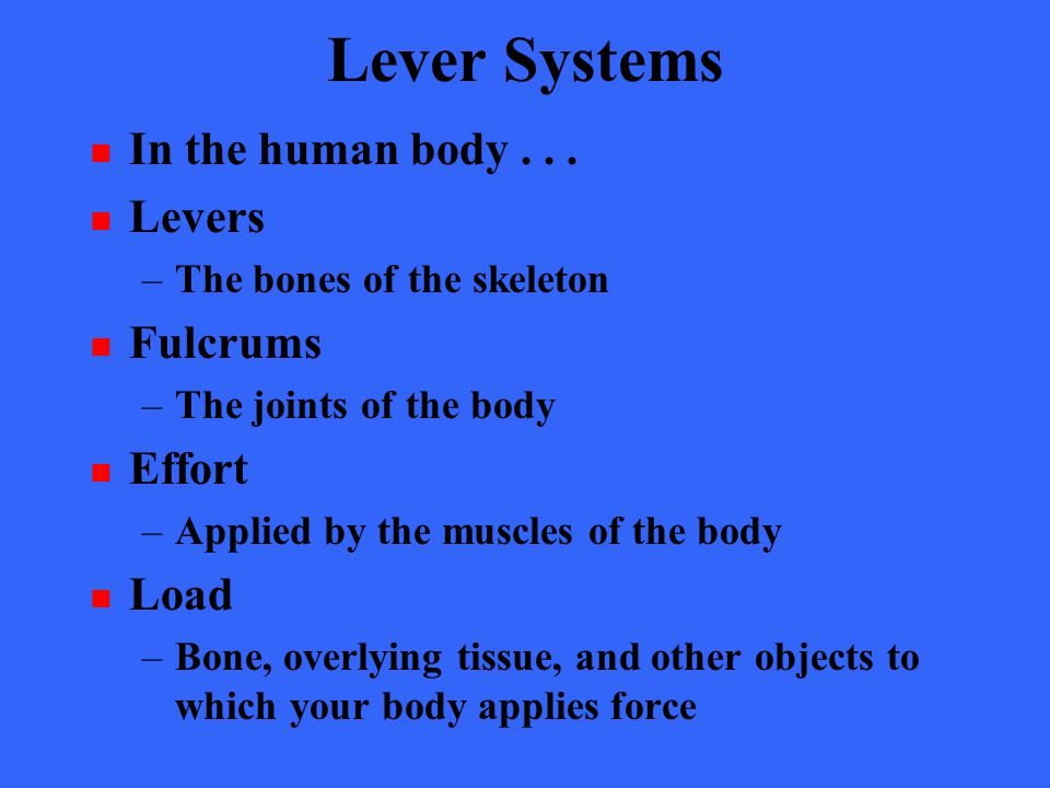 Lever Systems In the human body . . . Levers Fulcrums Effort Load