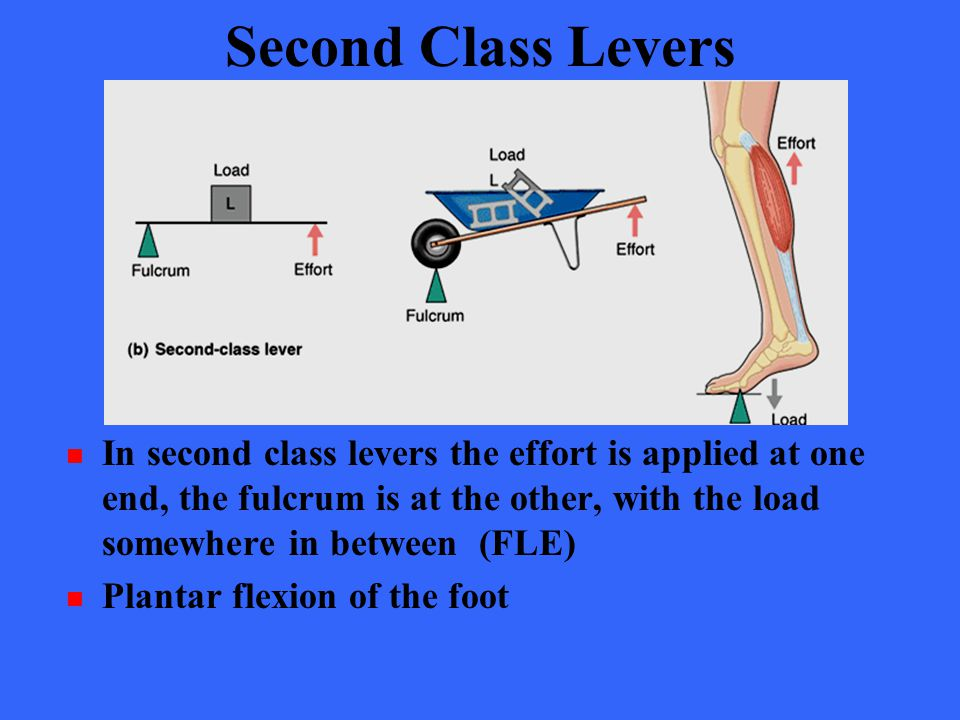 Second Class Levers In second class levers the effort is applied at one end, the fulcrum is at the other, with the load somewhere in between (FLE)