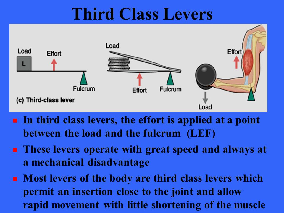 Third Class Levers In third class levers, the effort is applied at a point between the load and the fulcrum (LEF)