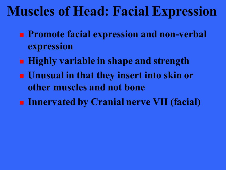 Muscles of Head: Facial Expression