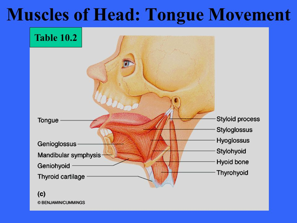 Muscles of Head: Tongue Movement