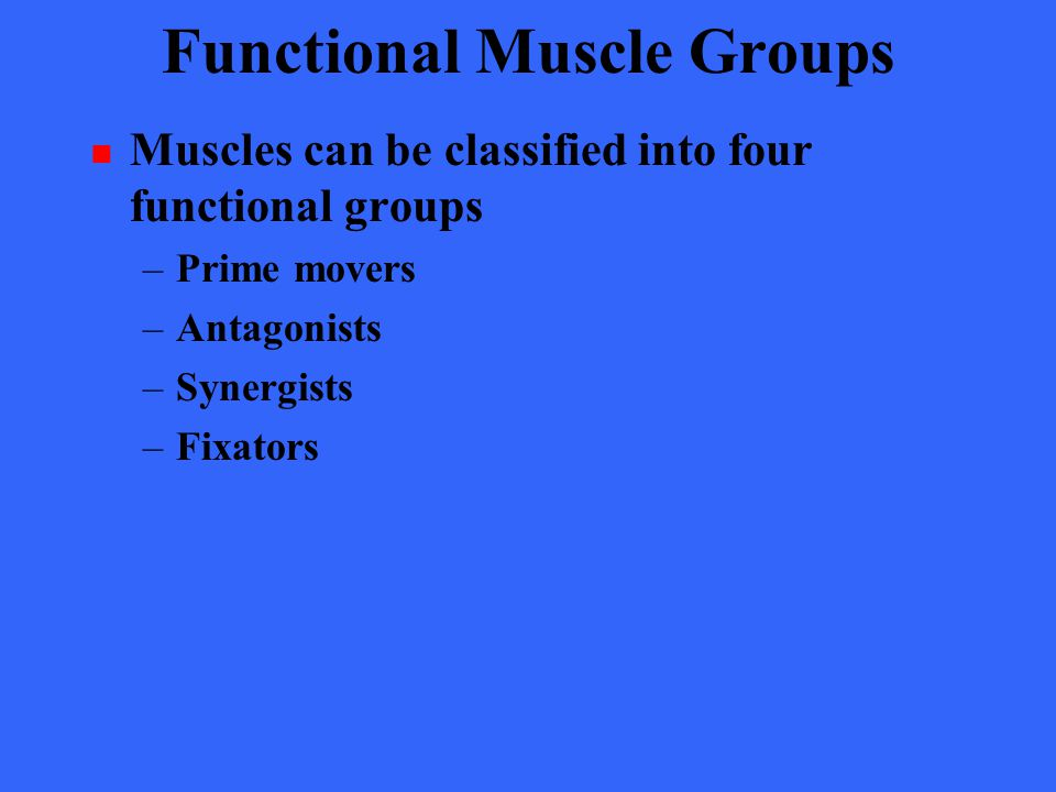 Functional Muscle Groups