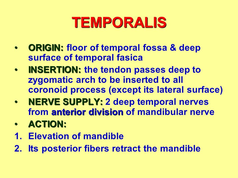 TEMPORALIS ORIGIN: floor of temporal fossa & deep surface of temporal fasica.
