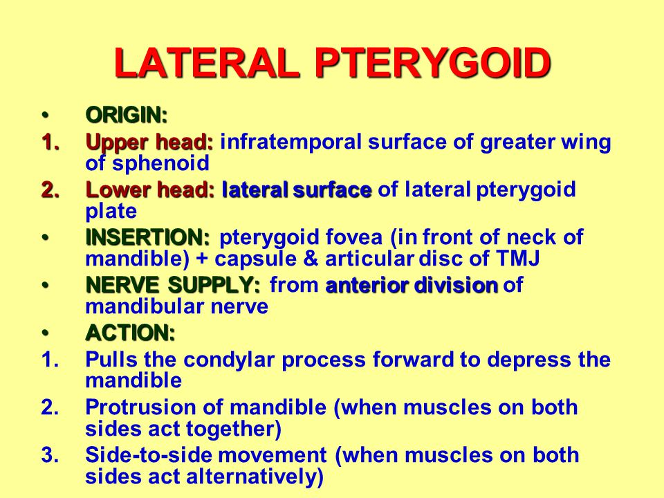 LATERAL PTERYGOID ORIGIN: