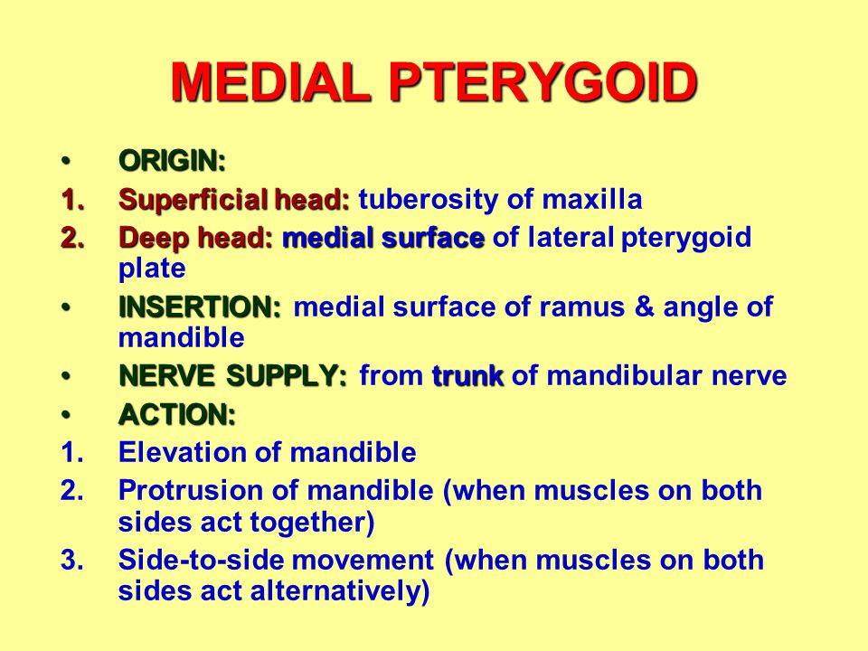 MEDIAL PTERYGOID ORIGIN: Superficial head: tuberosity of maxilla