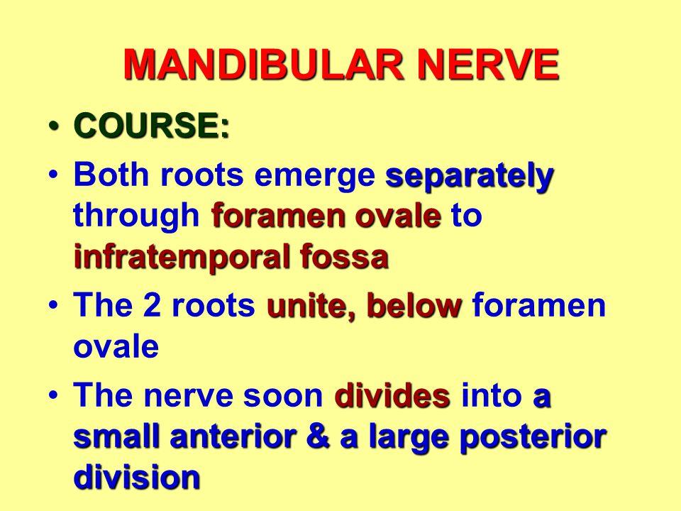 MANDIBULAR NERVE COURSE: