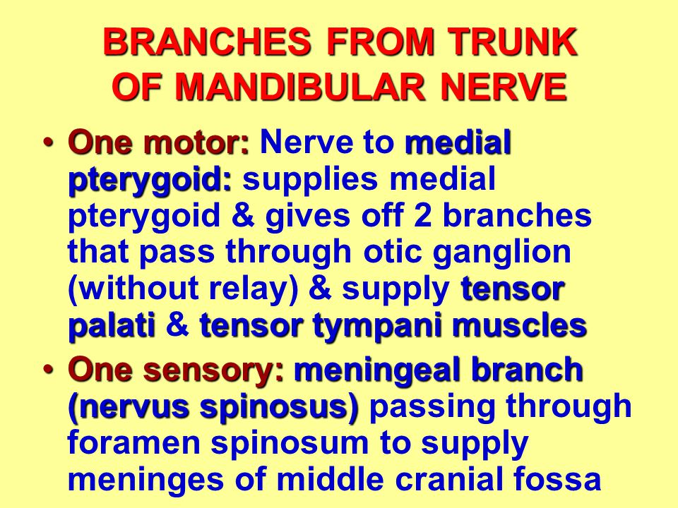 BRANCHES FROM TRUNK OF MANDIBULAR NERVE