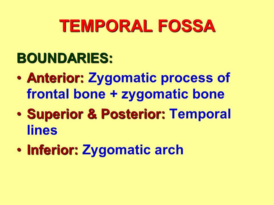 TEMPORAL FOSSA BOUNDARIES: