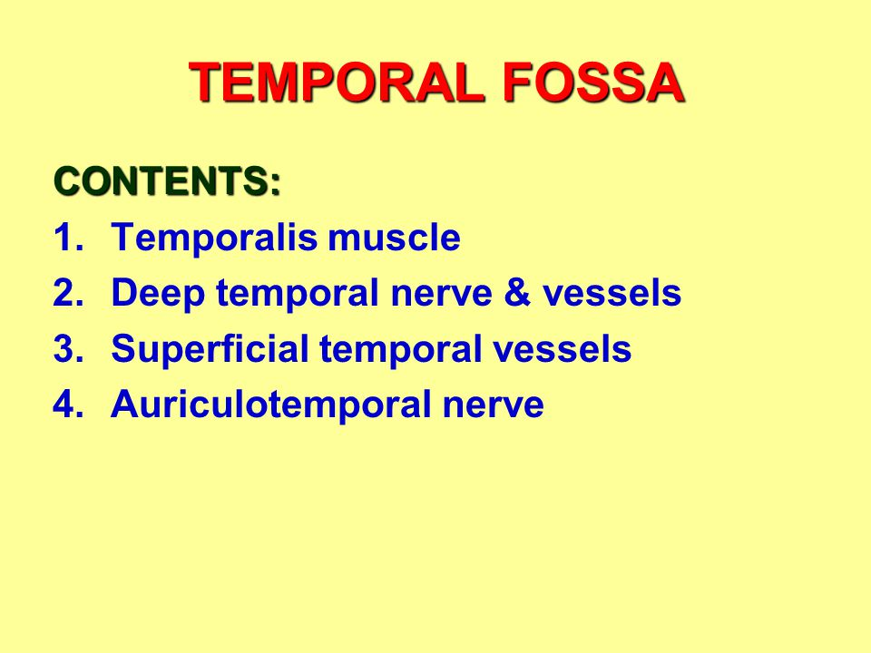 TEMPORAL FOSSA CONTENTS: Temporalis muscle