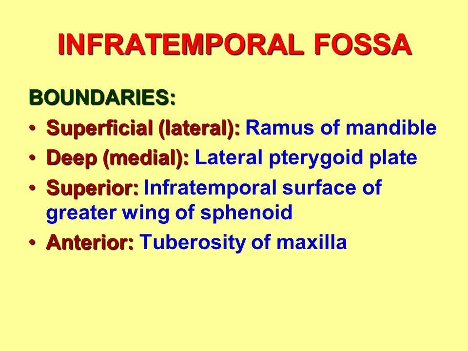 INFRATEMPORAL FOSSA BOUNDARIES: