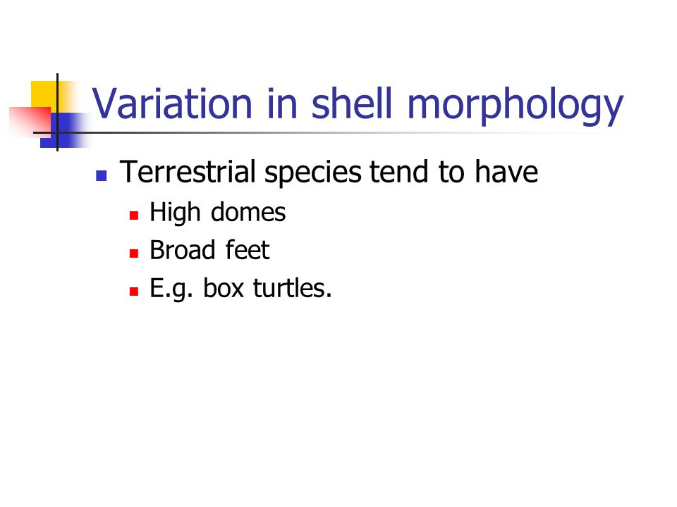 Variation in shell morphology