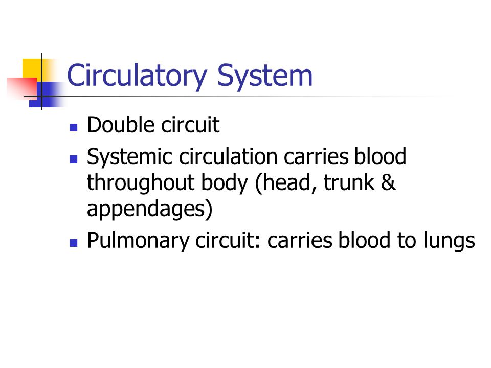 Circulatory System Double circuit
