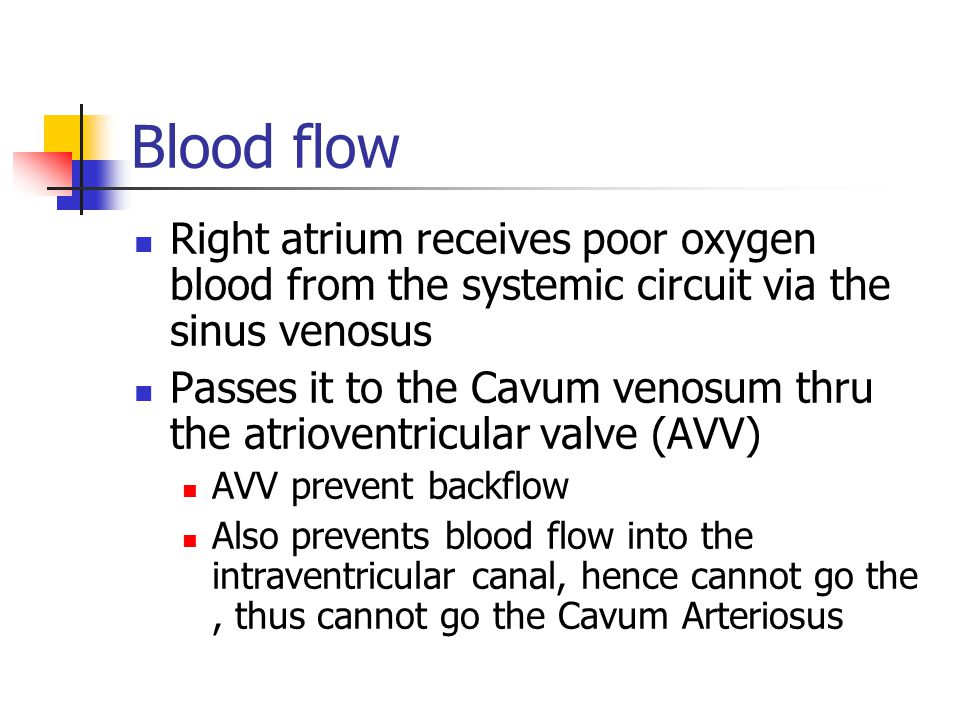 Blood flow Right atrium receives poor oxygen blood from the systemic circuit via the sinus venosus.