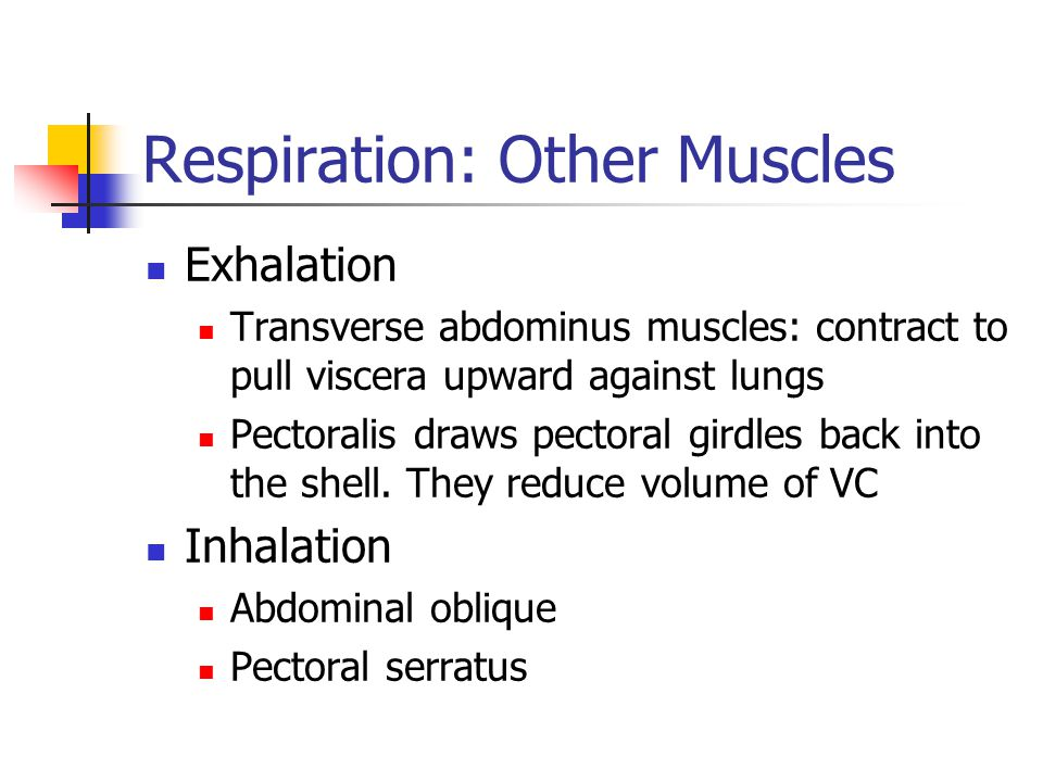 Respiration: Other Muscles