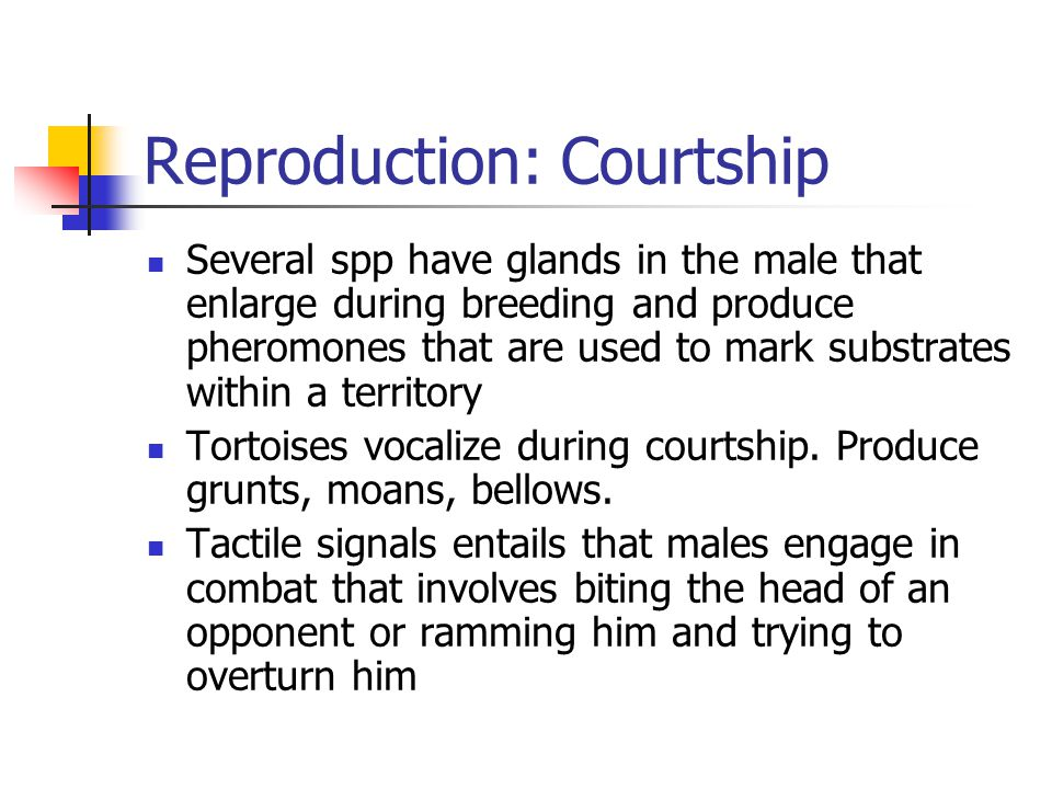 Reproduction: Courtship