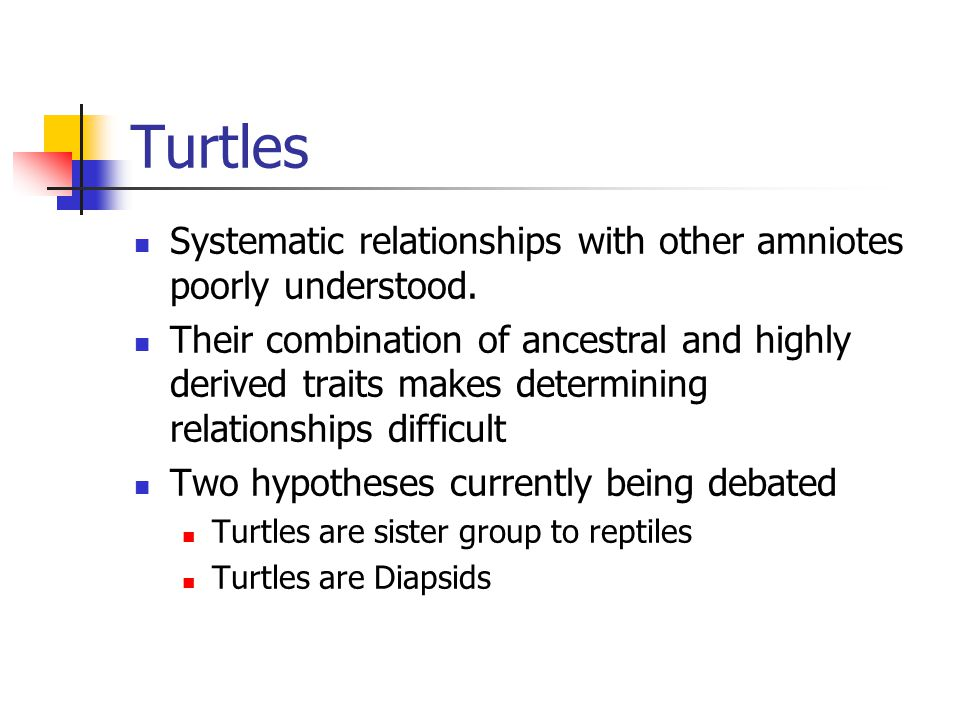 Turtles Systematic relationships with other amniotes poorly understood.