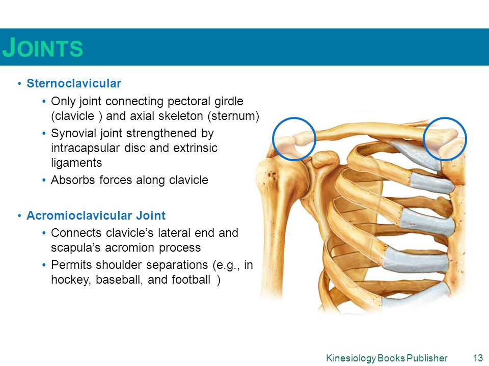 Joints Sternoclavicular