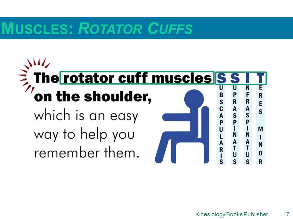 Muscles: Rotator Cuffs