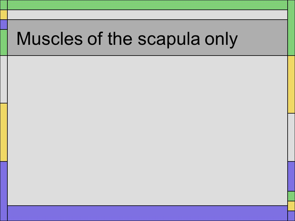 Muscles of the scapula only