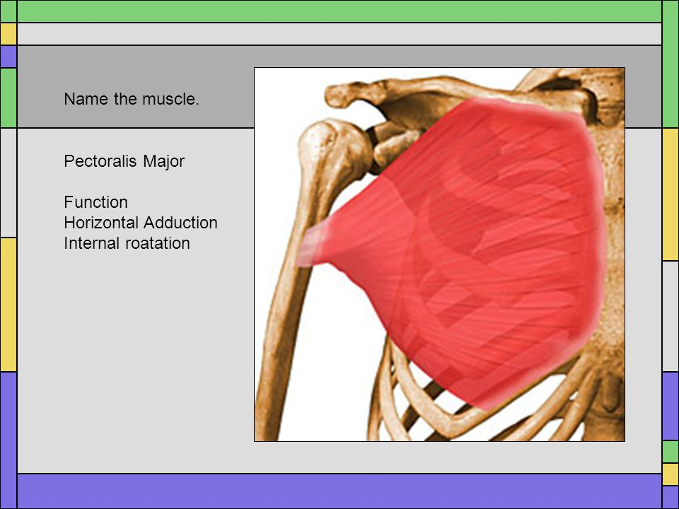 the shoulder joint test monday ppt video online download