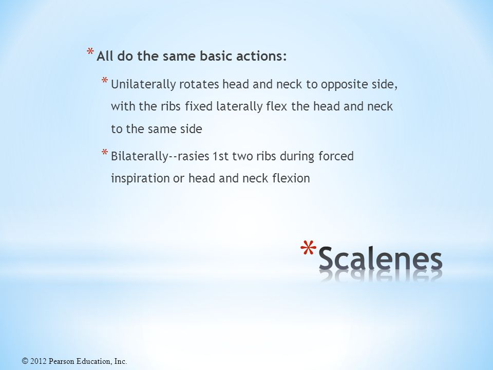 Scalenes All do the same basic actions: