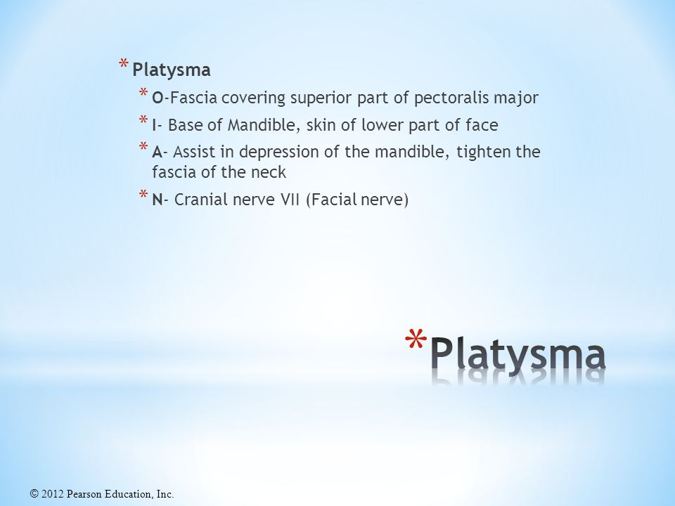 Platysma Platysma O-Fascia covering superior part of pectoralis major