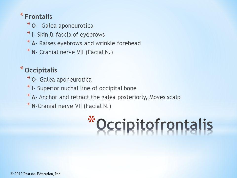 Occipitofrontalis Frontalis Occipitalis O- Galea aponeurotica