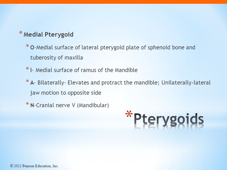Pterygoids Medial Pterygoid