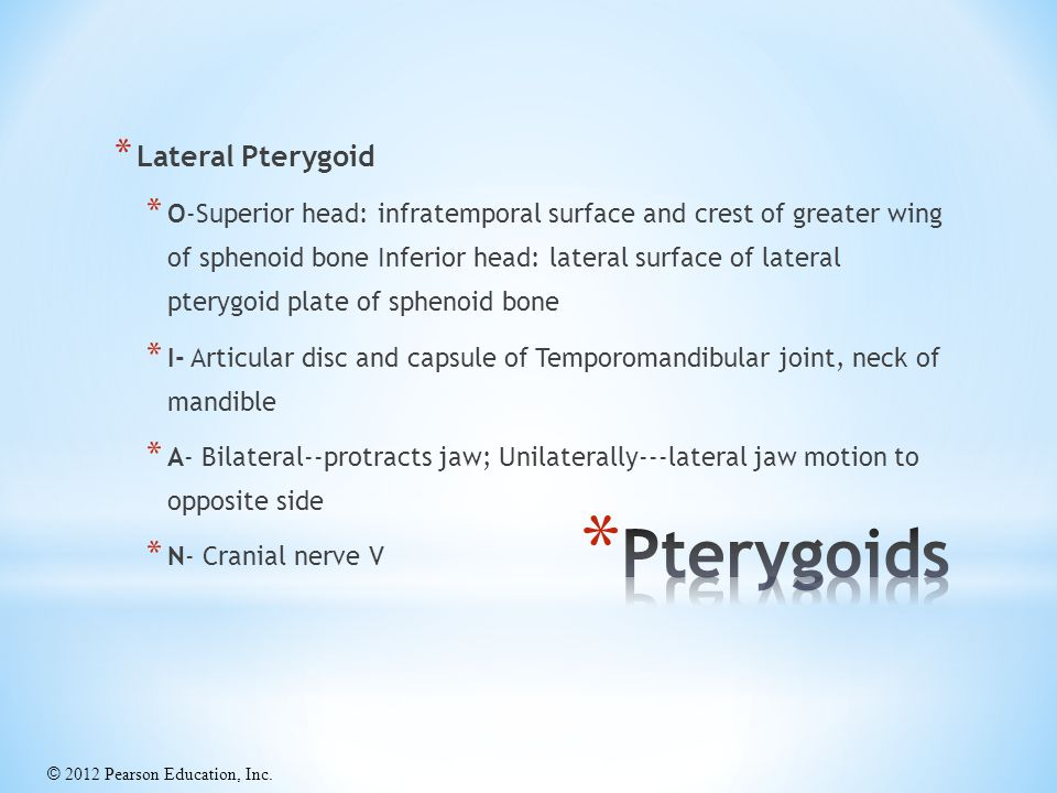 Pterygoids Lateral Pterygoid