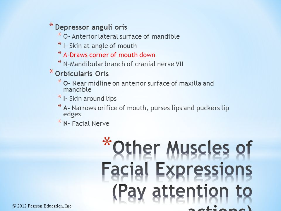 Other Muscles of Facial Expressions (Pay attention to actions)