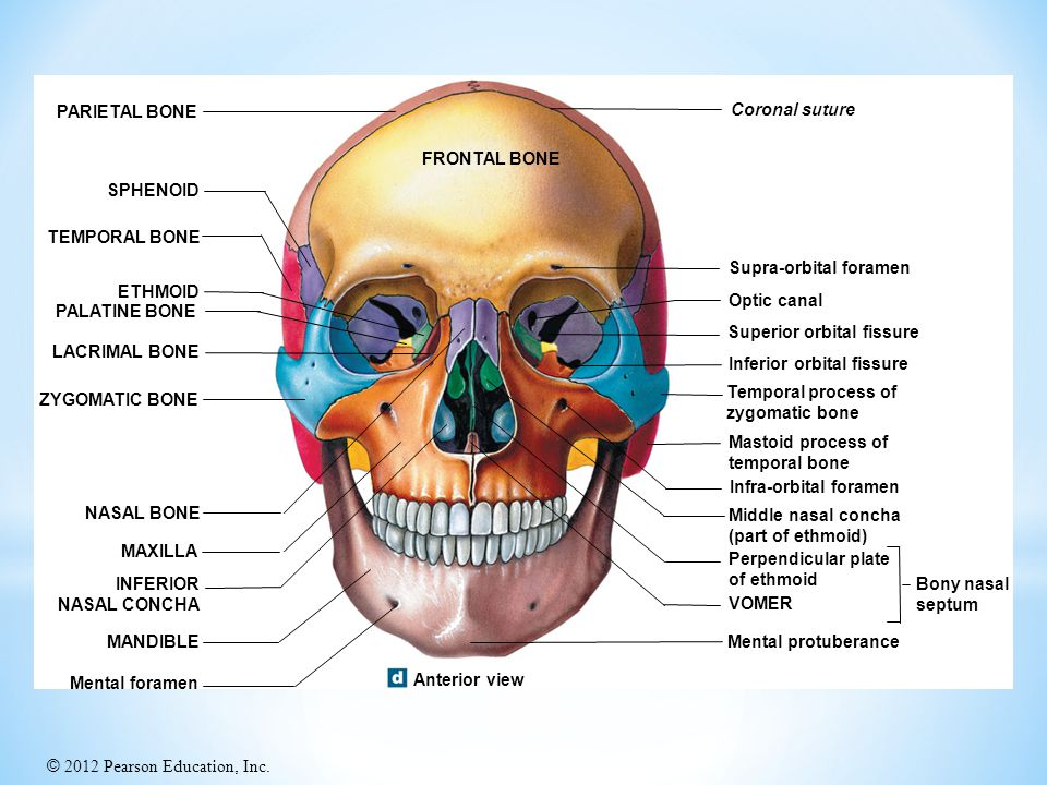 PARIETAL BONE Coronal suture. FRONTAL BONE. SPHENOID. TEMPORAL BONE. Supra-orbital foramen. ETHMOID.